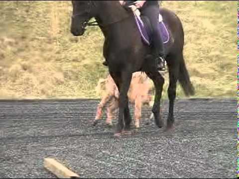 Donkey riding training (Savannah)