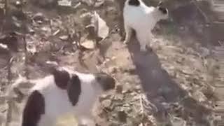 Стая котов напала на собаку