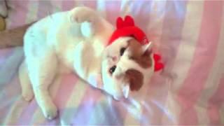 Кот Снуппи играет/Cat Snoopy Play
