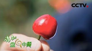《谁知盘中餐》 20200603 北京大樱桃的速度与激情|CCTV农业