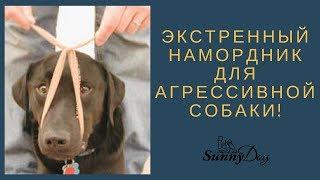 Экстренный намордник для агрессивной собаки. Как сделать ей намордник?