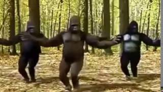 la bize her yer ankara maymun çok komik
