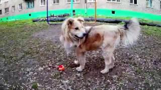Преданней собаки нету существа! (караоке)