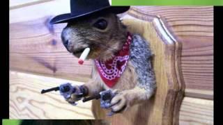 фото смешных животных, прикольные видео с животными.