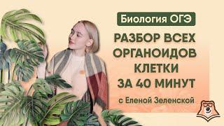 РАЗБОР ВСЕХ ОРГАНОИДОВ КЛЕТКИ ЗА 40 МИНУТ