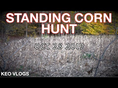 Hunting Standing Corn In Western NY