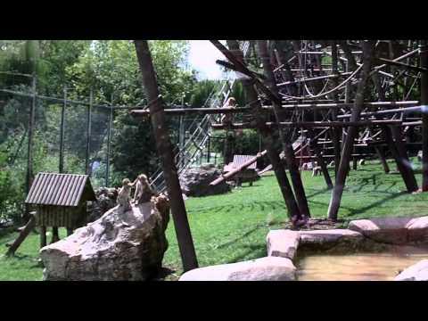 singes eau