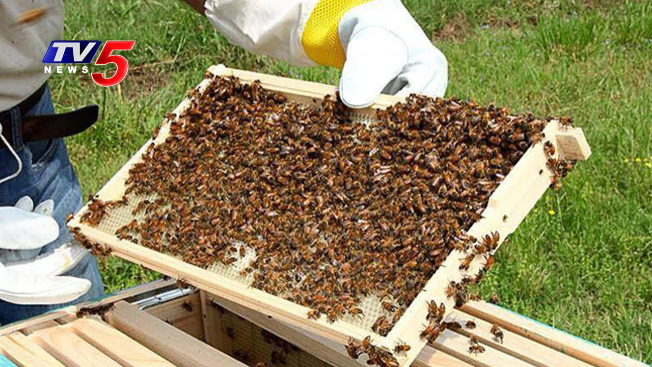 Image result for bee farm