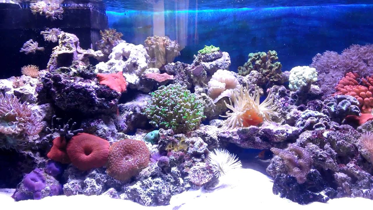 200l meerwasseraquarium youtube