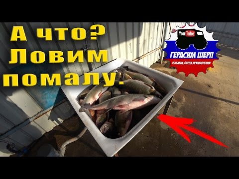 За рыбой в Астрахань! Рекорд побит! Рыбы хватит, едем на базу!