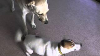 犬同士のけんかって、邪魔をしてはいけないそうですが、 いつもけんかを...