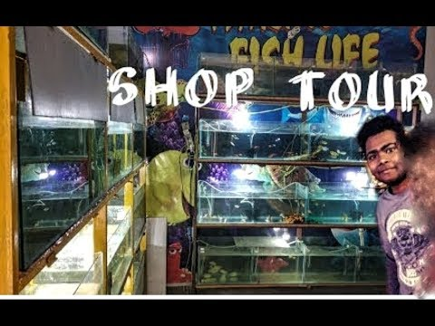 Welcome to marine fish life shop tour...