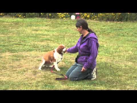 AA Dog Training - Teaching  Eye Contact
