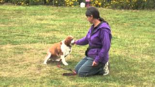 Aa Dog Training - Teaching  Eye Contact