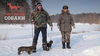 Охотничьи собаки. 13 серия. Жесткошерстная Такса