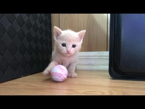 I am Back! Meet the 4 Week Old Ginger Kittens!