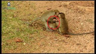 Why little monkey do bad on baby monkey-little baby angry
