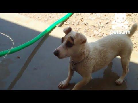 Dog attacks garden hose