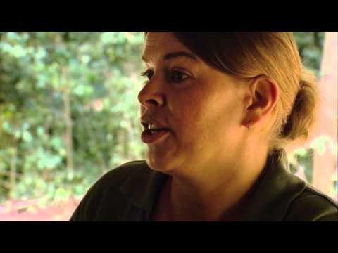 ►The Jungle Adventure: Living amongst Gorillas