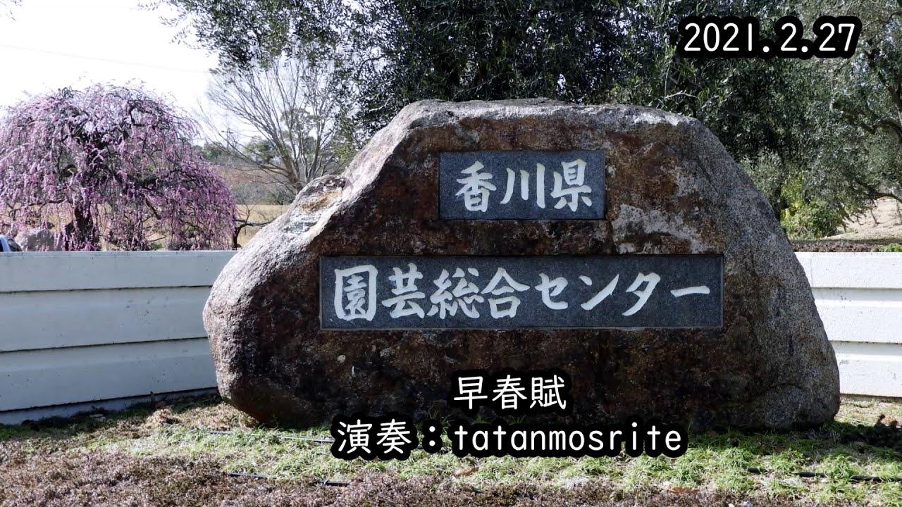 早春賦(2021 2 27)(香川県園芸総合センター)