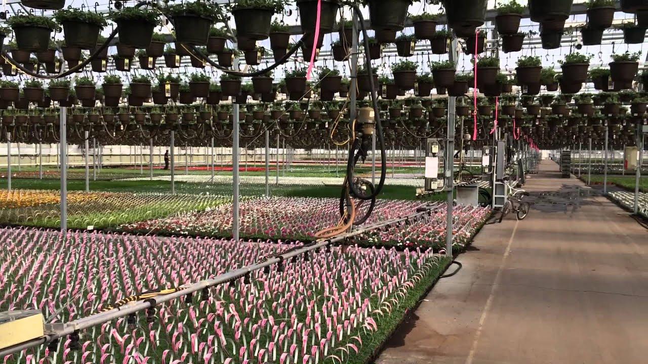 The greenhouse dallas tx - 10 Acre Open Greenhouse At Dallas Johnson Greenhouses Council Bluffs Ia