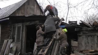собак поднимают на крыши домов