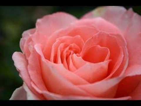 Happy Valentineu0027s Day Mom
