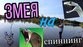 ЗМЕЯ НА СПИННИНГ Рыбалка ЛЕТОМ на реке САМАРА ЛОВЛЮ НА ВОБЛЕРА