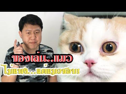 """ไม่ต้องเสียเงินฟรีๆอีกแล้ว!! """"ของเล่นแมว"""" ราคาถูก  แมวชอบ ....เล่นยังไงก็ไม่เบื่อ!!"""