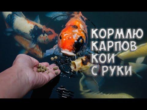 рыбка мутант игры