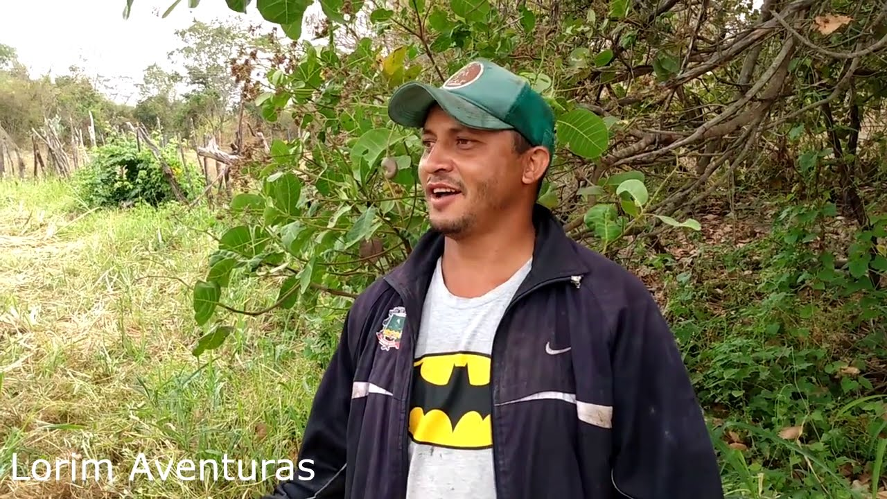 A moagem de cana no engenho sitio cajuí em Milagres Ceará [ parte 2 ]