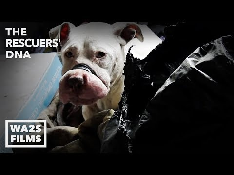 Hope For Paws As Dogs Rescued From Dog Fighting By Animal Cops Detroit: The Rescuers DNA