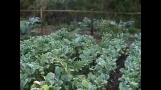 Permaculture 2015 Ole   Welcome To My Permaculture Vegie Garden