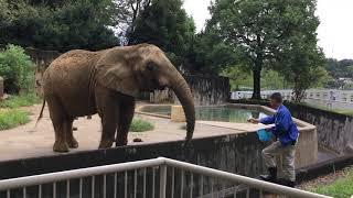 飼育員さんからおやつをもらうケニーさん 2017/09/17(東山動植物園) thumbnail