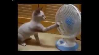 Самые Смешные Коты, Кошки и Котята, Улыбнись1