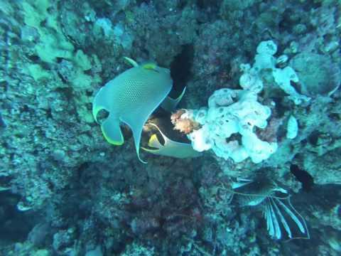 Diving the Captiva Blue Hole