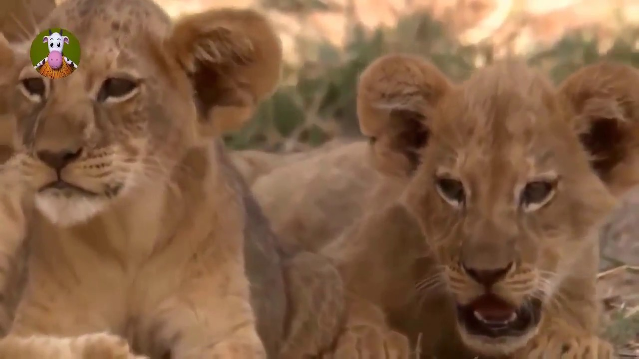 Wild Animals Fighting 2018 - Leopard, Wild Boar, Lion, Gorilla, Baboon Big Battle - NQH Animal