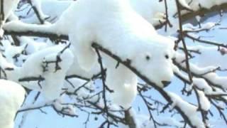 Jaromír Nohavica - Grónská písnička