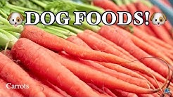 TOP 10 BEST FOODS FOR DOGS!!