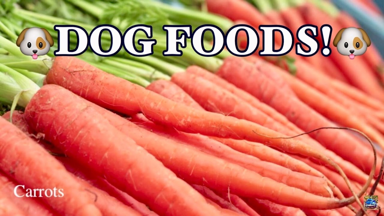 Top 10 Best Foods For Dogs Youtube