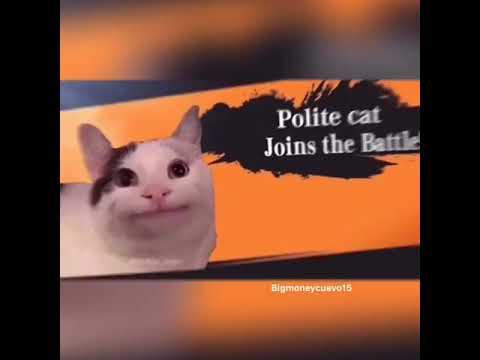 polite cat meme