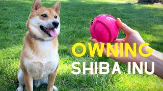 The Ultimate Guide of Owning a Shiba Inu (7 Tips for New Dog Owners)