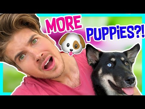 Download Youtube: WILL LARK HAVE PUPPIES?!