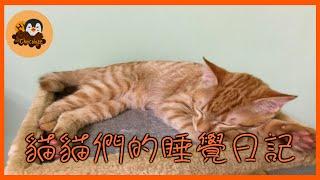 【巧克力】『橘子冰的日常』- 貓貓們的睡覺日記 thumbnail