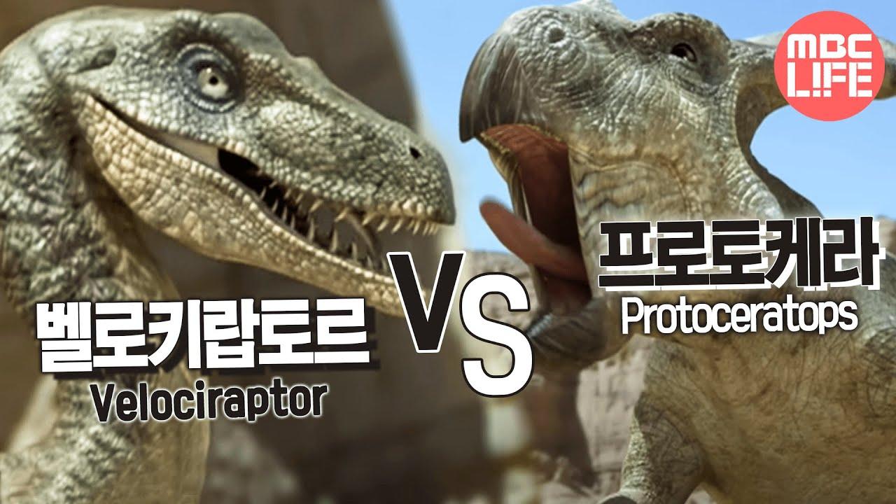 velociraptor vs protoceratops the land of dinosaurs 07 vs youtube