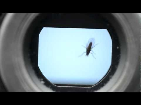 Fly in the viewfinder