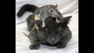 видео Средство изгнать мышей из парников