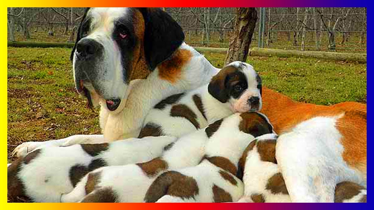 How Many Puppies Can A Dog Give Birth To