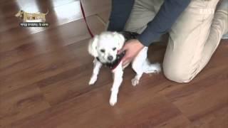 세상에 나쁜 개는 없다 - 바닥을 무서워하는 개 미키_#002