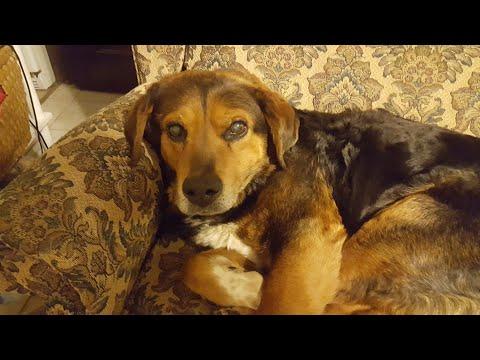 Animal rescue needs help.